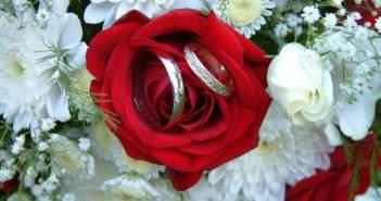 anillos-de-boda-preciosos