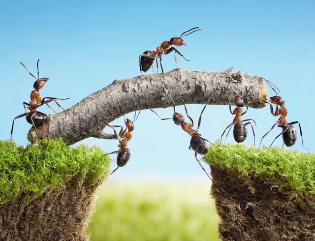 recursos humanos deben motivar trabajar en equipo