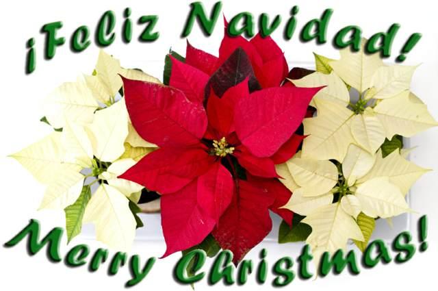 la festividad maravillosa Feliz Navidad
