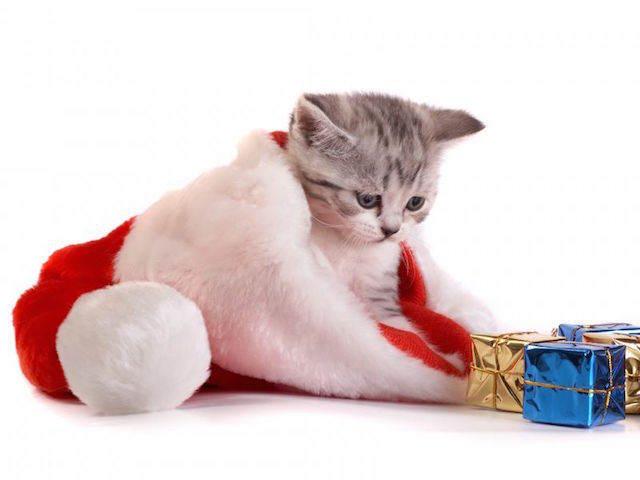 tarjeta de Navidad gato pequeño vestido gorro regalos