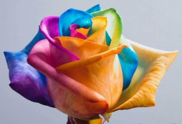flores bonitas rosa diferentes colores ideas originales decoración