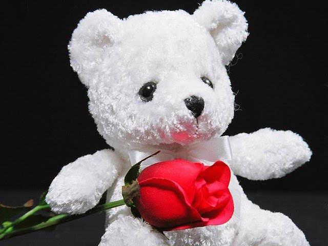 osito blanco rosa feliz aniversario mi amor