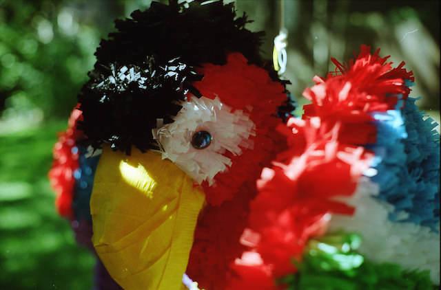 preciosa piñata cumpleaños tema aves exóticas