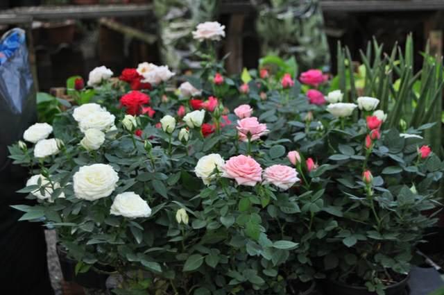 flores bonitas decoración fiesta especial maravillosa