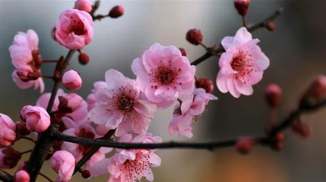 flores primavera ideas bonitas decoración fiesta