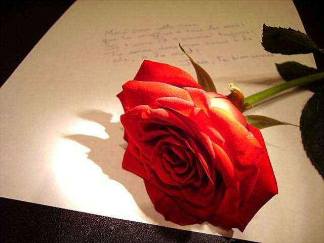 rosa bonita noviazgo inolvidable momentos románticos