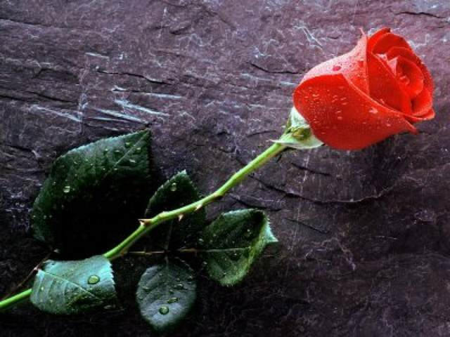 flores bonitas ideas clásicas románticas noviazgo