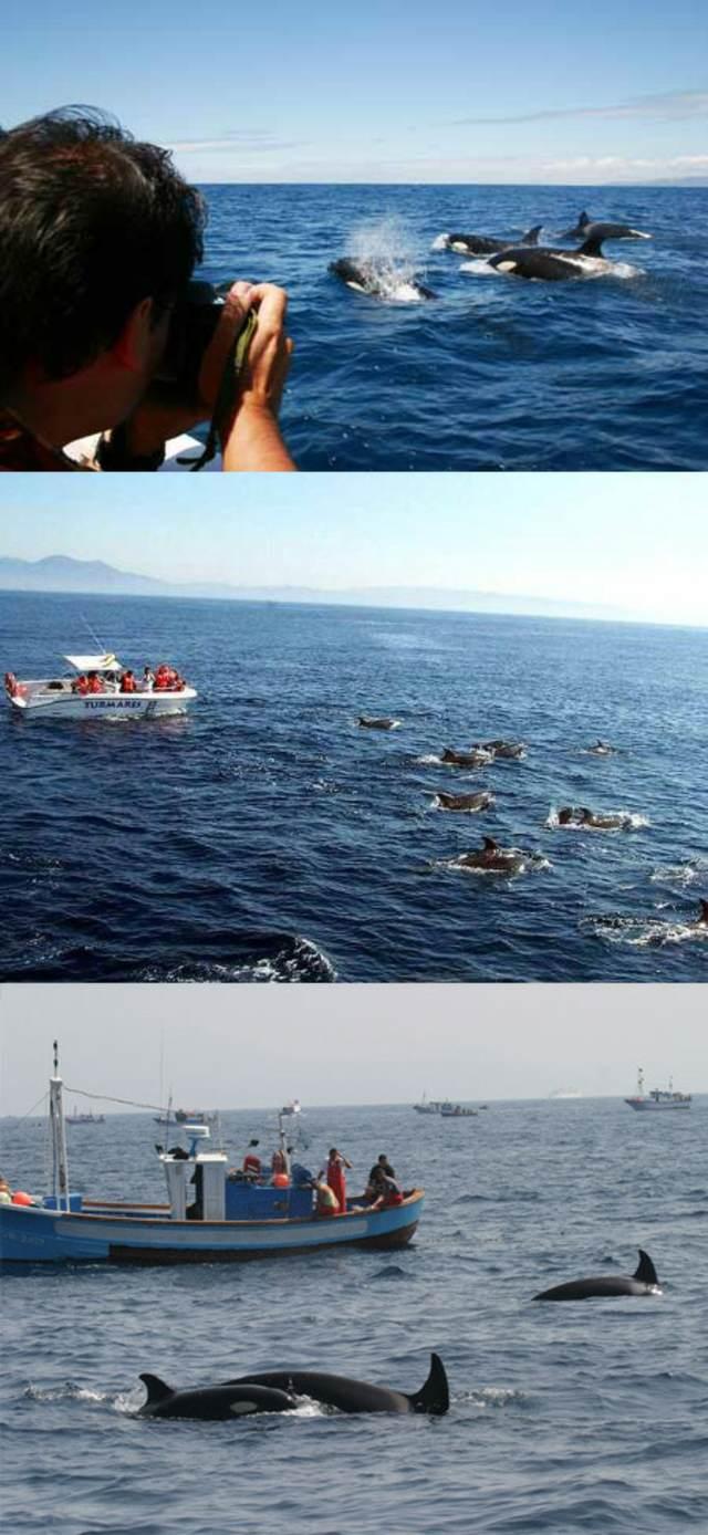avistamiento delfines ballenas aniversario de novios inolvidables ideas
