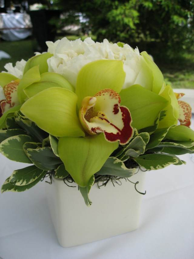 preciosas orquídeas ideas sencillas decoración fantástica