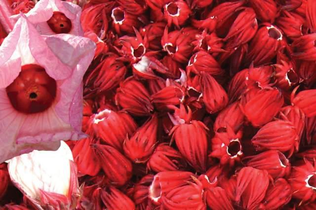 flor de Jamaica recetas saludables ideas fantásticas