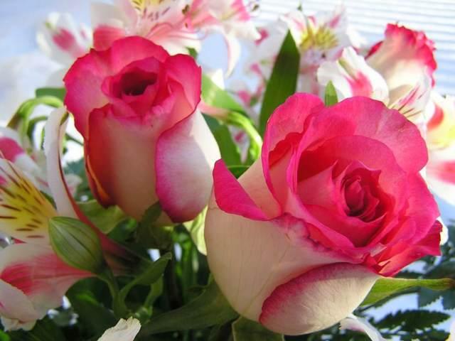 flores hermosas noviazgo ideas románticas